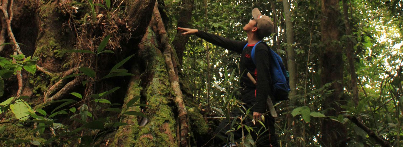 Man reaching towards a tree